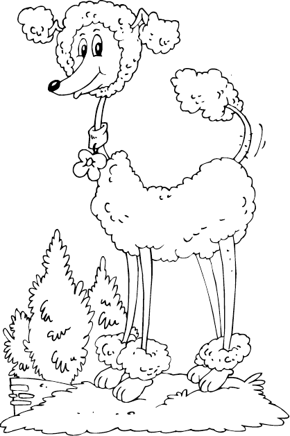 Poodle Coloring Page Coloring Com